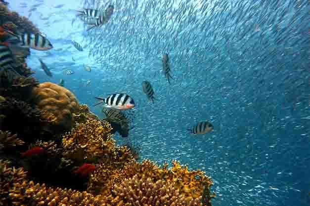 Foto de un bautismo de buceo en Tenerife en el fondo marino.