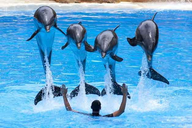 Espectáculo de delfines en el Loro Parque de Tenerife